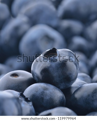 One blueberry standing out from a pile of blueberries - stock photo