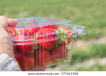 one box of strawberry in a hand with blurred strawberry field background - stock photo
