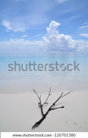 One branch on the beach