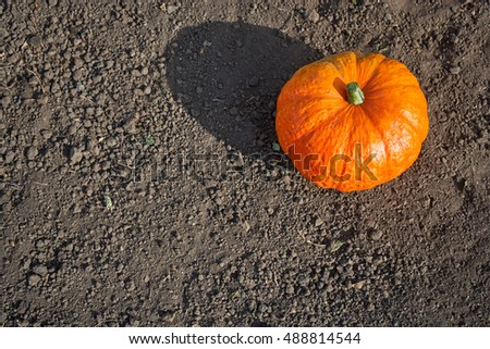One bright pumpkin lying on the ground