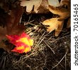 One bright red an yellow autumn leaf surrounded by brown, dead leaves on the ground. - stock photo
