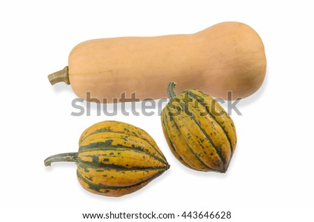 One Butternut and Two Acorn Squash on White - stock photo