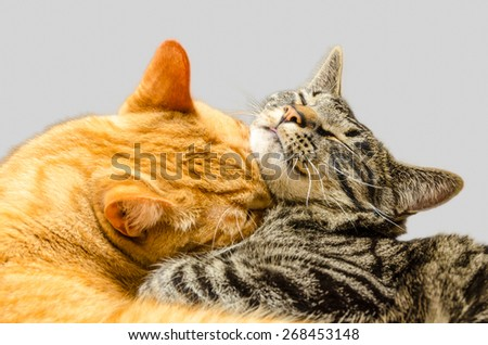 One cat grooming another cat. - stock photo