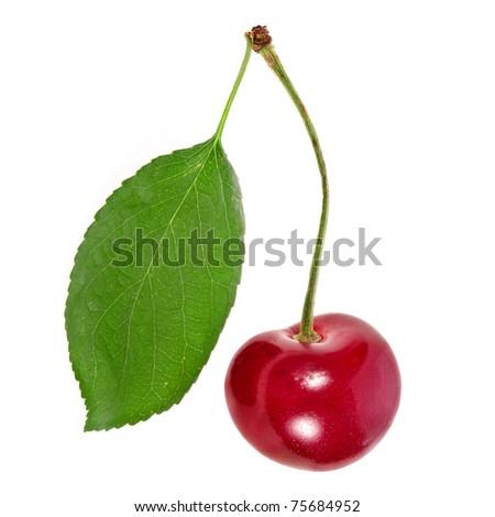One cherry fruit close up macro shot isolated on white background - stock photo