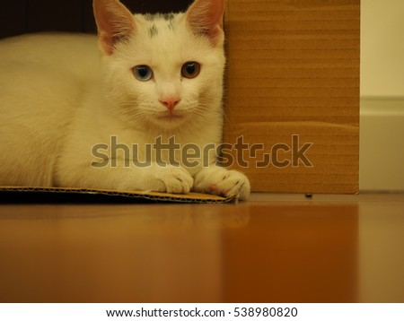One cute white cat with all kinds of cute cat