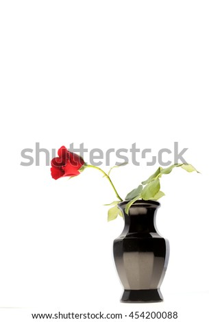 One dark red rose on white - stock photo