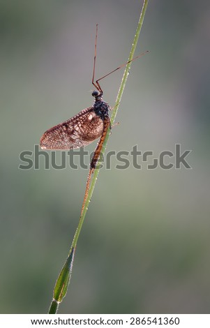One day I'll fly away - stock photo