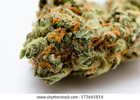 one dose of marijuana, medical hemp - stock photo