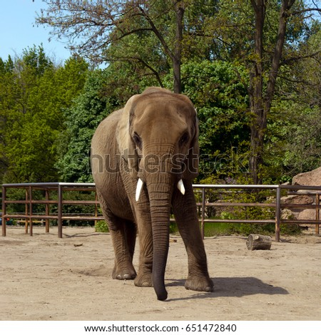 One Elephant at the Berlin Zoo, Germany