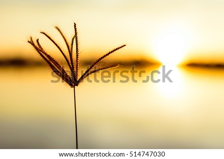 one flower on sunrise time, recreation in the lake, nature in a summer morning
