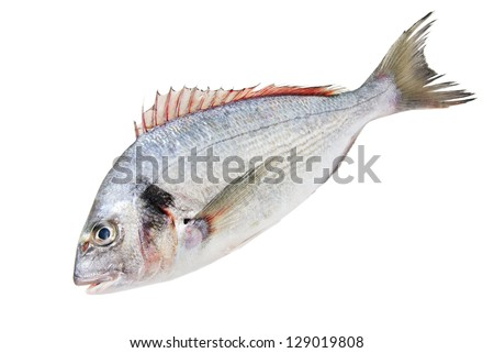 one Fresh Dorado Fish isolated on white background - stock photo