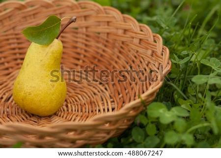 One Fresh Ripe Yellow Pear With Leaf In Wicker Basket On Green Grass Outdoor, Close-up. Background Of Wicker Basket With Fresh Ripe Pear. Fresh Ripe Yellow Pear. Selective Focus.