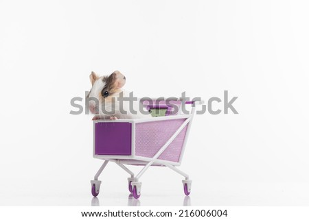 one funny hamster with shopping cart. one rodent sitting in purple cart - stock photo