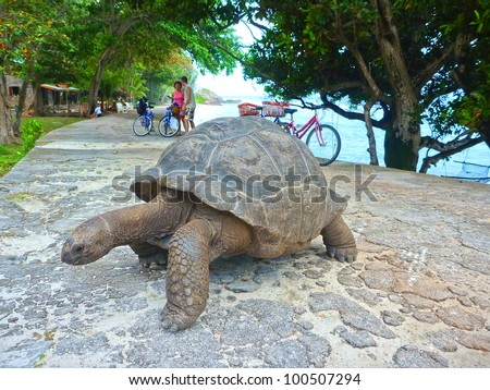 One Giant Turtle on Seychelles, Indian Ocean, Africa - stock photo