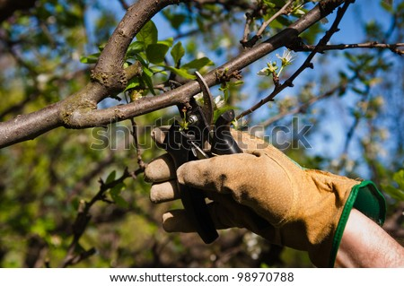 One gloved hand pruning branches in the yard - stock photo