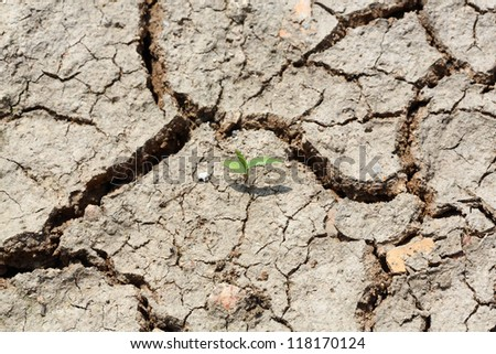 One grass growing on dried and cracked soil