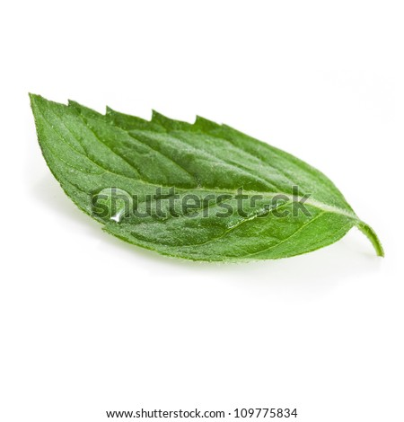 One green mint leaf with water drop close up isolated on white background - stock photo