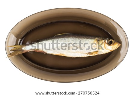 One herring in black transparent glass plate isolated on white background - stock photo