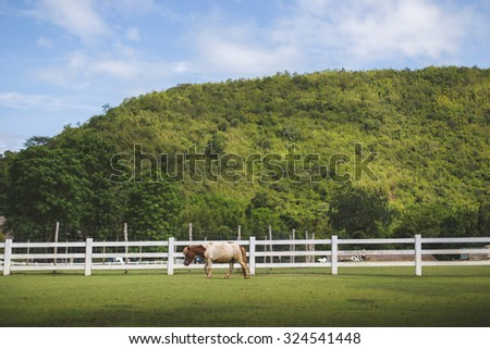 One horse walking in the farm. Background is mountain and white fence. - stock photo