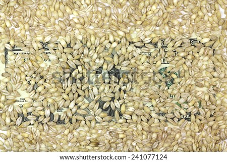 one hundred dollars banknote with barley grains background - stock photo