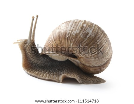 One isolated helix in movie on the white background - stock photo