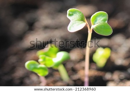One leader sprout in soil - stock photo