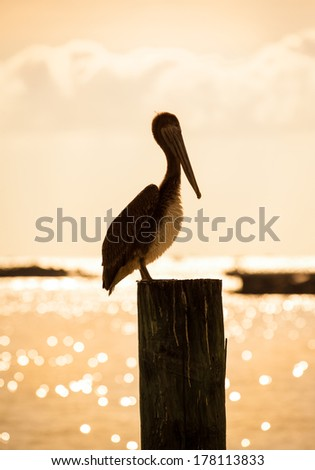 One lonely pelican resting on a pole at sunset, ocean in background