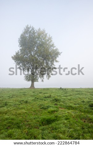 One lonely tree on the banks of a Dutch river on a foggy morning in the early autumn season. - stock photo