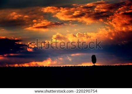 One lonely tree silhouette on dramatic sunset sky background, amazing orange cloudscape, majestic sky panorama, autumn season concept  - stock photo