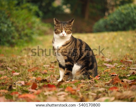 One lovely wild cat in the garden in autumn