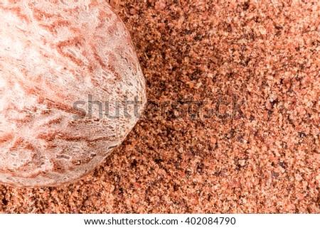 One nutmeg whole and powder isolated on white background - stock photo
