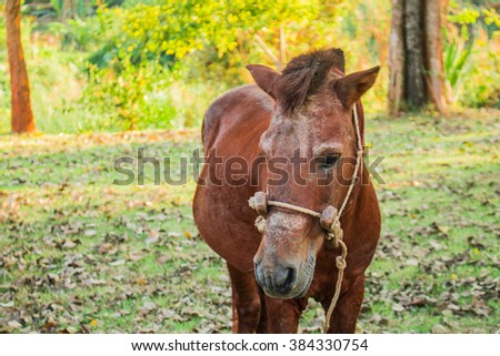One of the horses in a green lawn