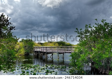 One of the many boardwalks in the Everglades National Park. - stock photo
