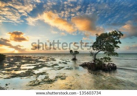 One of the reef Florida Keys islands at sunrise. Florida Keys, USA. - stock photo