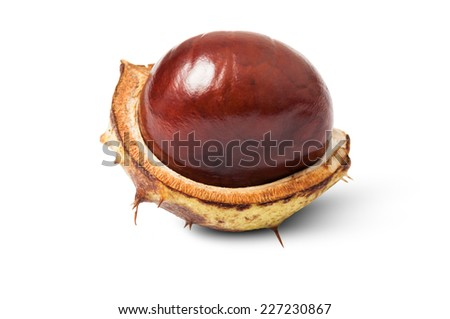 One perfect horse chestnut isolated on white background