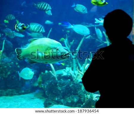 One person silhouetted standing and looking at fish in aquarium - stock photo