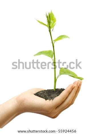 One plant in female hand on white background