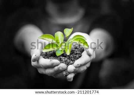 One plant in female hands on black and white background - stock photo