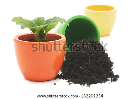 one plant in yellow cup and green cup with ground. Isolated on white background.