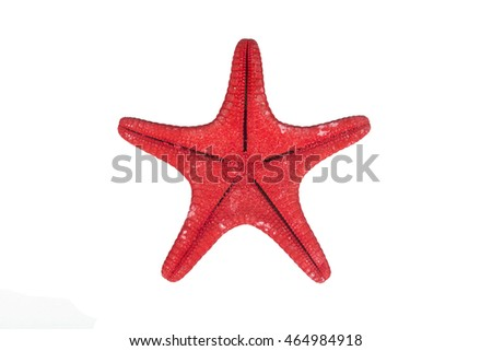 One red starfish isolated on white background