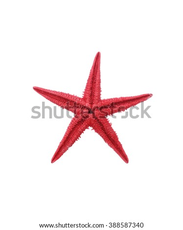 One red starfish on white background. Isolated with clipping path - stock photo