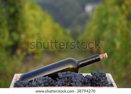 One red wine bottle on grapes cest on vineyard background