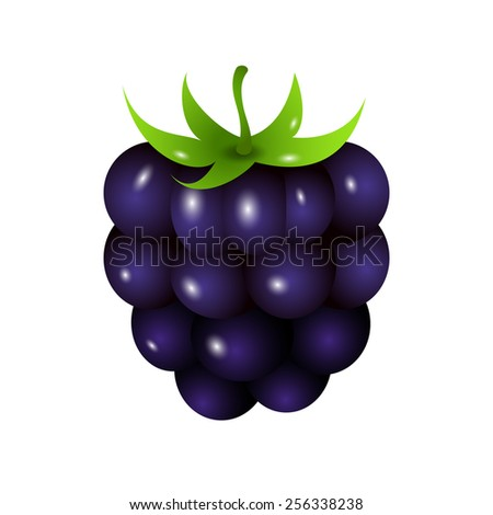 one ripe blackberry isolated on white. Raster version - stock photo