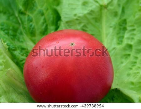 One ripe red tomato lying on lettuce leaf Ukraine - stock photo