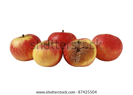 One rotten, bad, decaying apple in bunch of four good apples - stock photo
