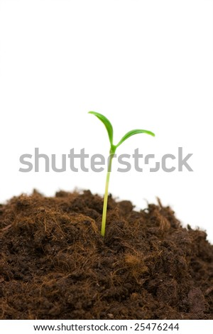 One seedling illustrating the concept of new life - stock photo