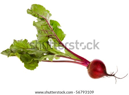 One Single Beet , Beetroot , Table Beet  isolated on white - stock photo