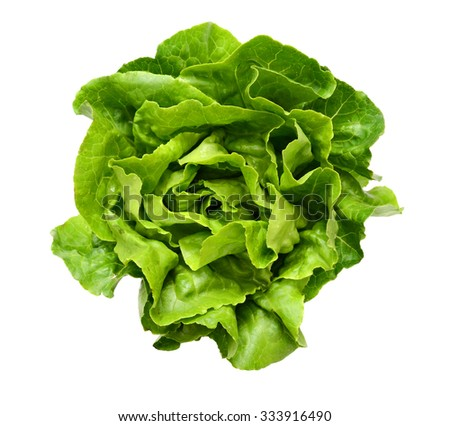 One Single Lettuce Salad Leaf Close up Top View Surface isolated On White Background - stock photo