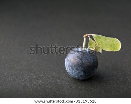 One sloe,Prunus spinosa - blackthorn on a grey background - Close up - stock photo