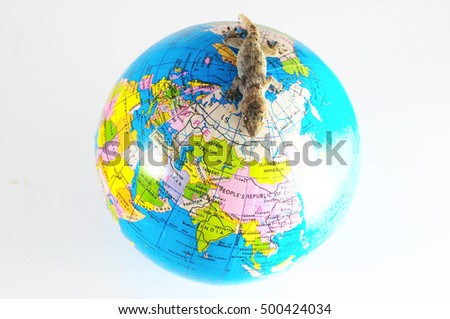 One Small Gecko Lizard and Globe on a White Background